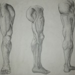copied anatomy plates
