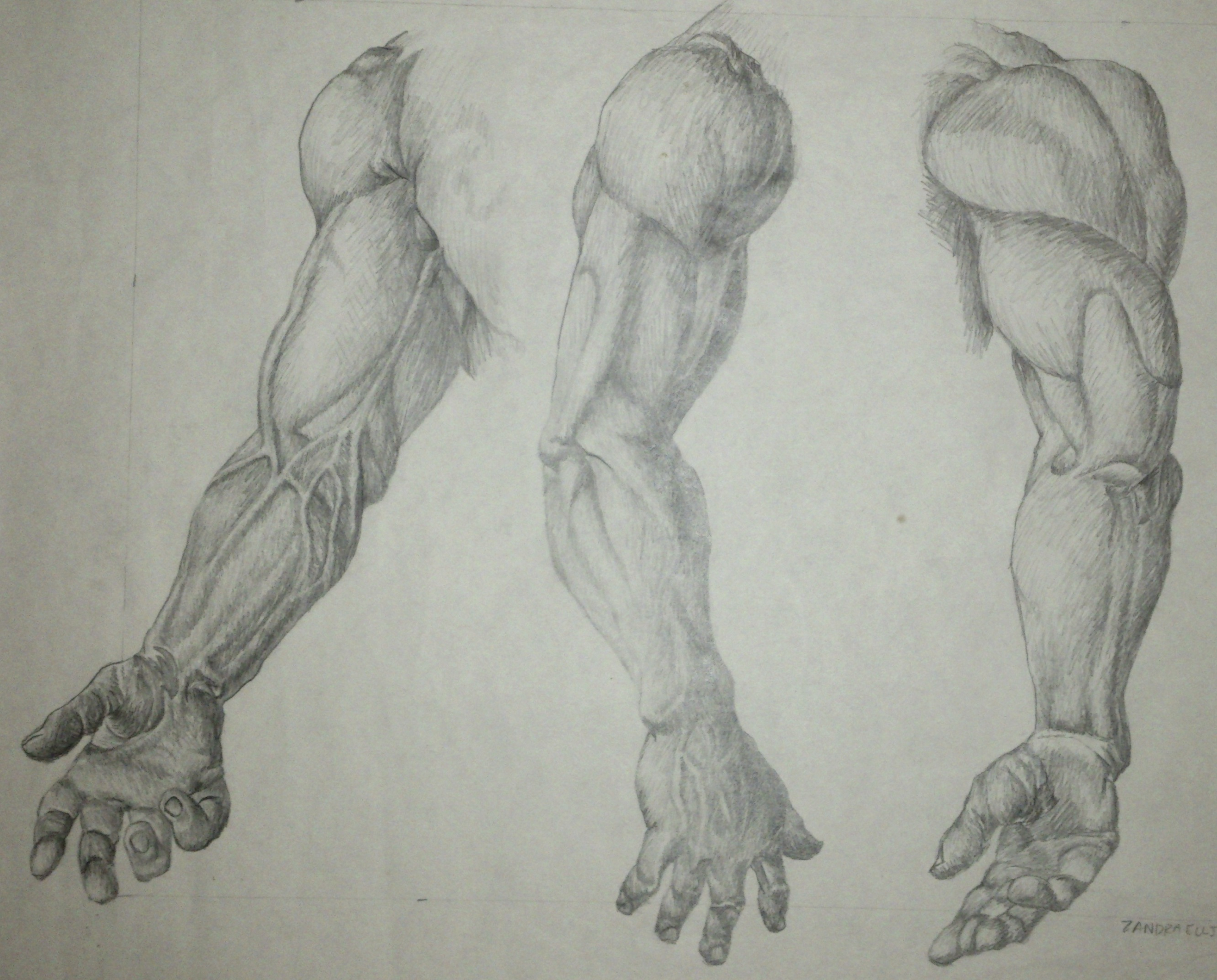 pencil and paper anatomy plates